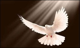 Holy spirit dove